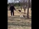 Боевые коты это страшные звери