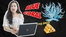 HP Spectre X360 13T 2019 | Màu xanh sang trọng đẳng cấp rồi lại còn có thêm họa tiết GOLD quý phái