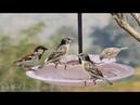 Cool Bird Feeder Make From Waste Material - DIY Best Bird Feeder