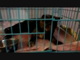 Самира, поступила в приют из Чурилово 31.10.18