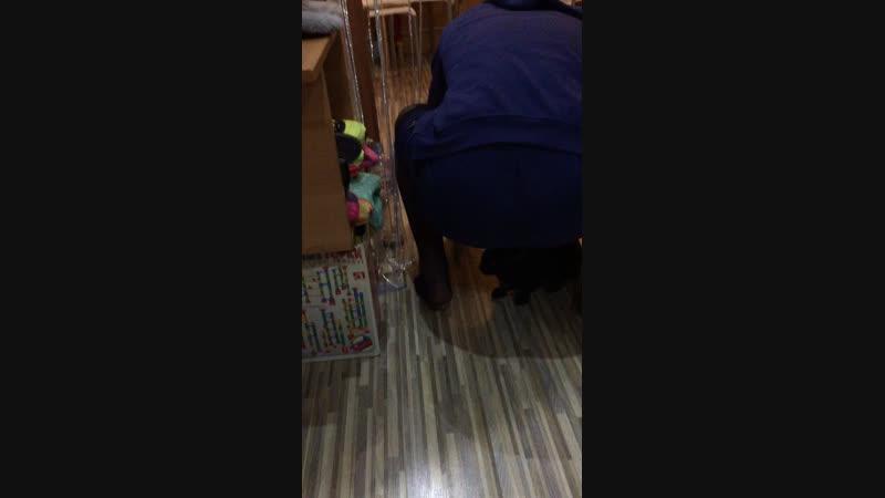 Смотри кошку ебу