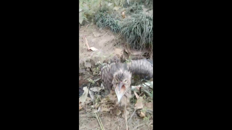 Injured bird in a dirty ditch in Antananarivo zoo