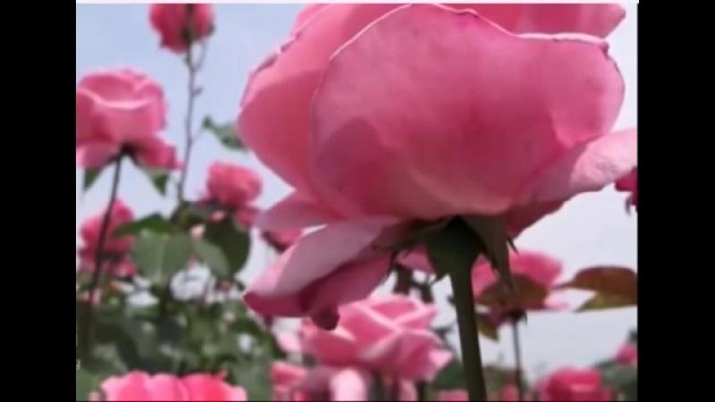 Я встретил розу-Тамара Козлова