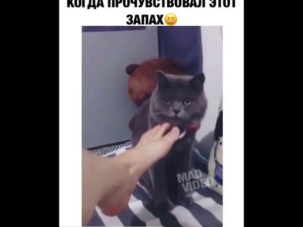 ПРИКОЛЫ С КОТОМ. кот понюхал ногу