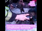 В Магадане пожарные спасли двух котов