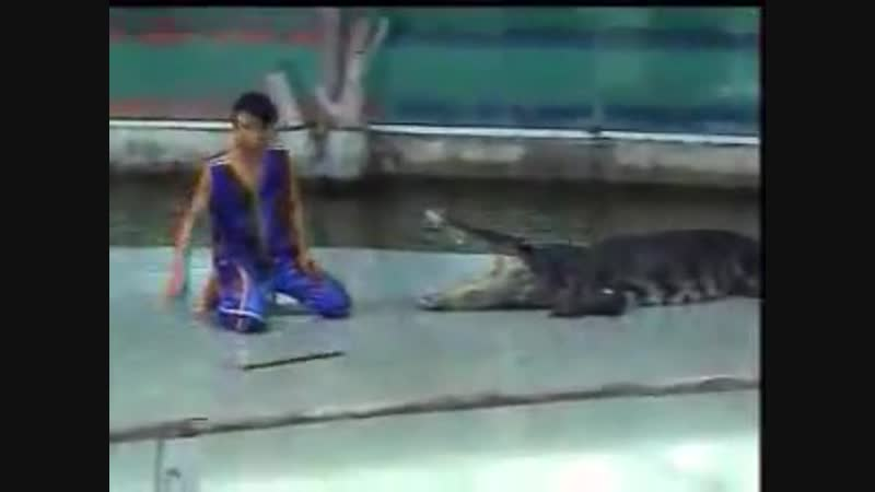 Нападение крокодила. Переломал руку открыто в трёх местах. Смертельное вращение. (18)