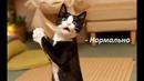 Коты ругаются на хозяйку.