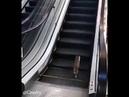 Кот на эскалаторе Юмор
