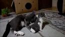 Говорящие коты! Лучшая подборка №12