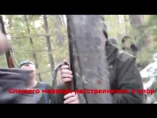 НЕЛЮДИ из страны духовных скреп застрелили в упор спящего медведя. Также подло, исподтишка действуют их военные, дипломаты, спор
