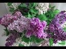 Картина маслом поэтапно Букет сирени.Часть I.Bouquet of lilac.Picture