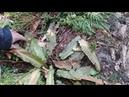 Вечнозеленые ценности и орхидеи