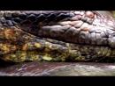 Ужасы Амазонии 11 Страшных Существ Амазонки