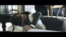 Влюбленные / Belle du Seigneur (2012) Дублированный трейлер [HD] 720p