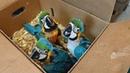 Контрабанда по-чилийски: редких попугаев перевозили в такси