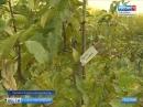 Наступило самое подходящее время для посадки плодовых и ягодных культур. Как не ошибиться с саженцами?