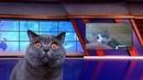 Смешные коты и кошки от КотоНьюс, мировой заговор против кошек, сбежал опасный преступник