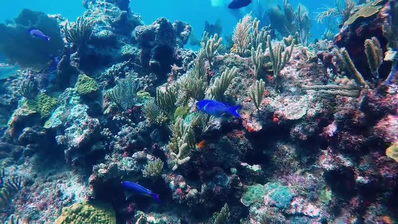 Diving in Cancun, Isla Mujeres, Mexico.Caribbean sea.Дайвинг! Фридайвинг в Челябинске!