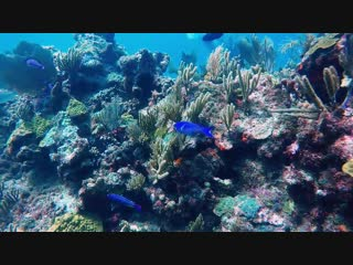 #Diving in Cancun, Isla Mujeres, Mexico.Caribbean sea./#Дайвинг! #Фридайвинг в Челябинске!