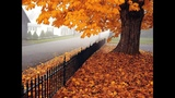 Wonderful Guitar Acoustic Music Autumn Nature Sound Best Chill Emotion Relaxing Music Spa