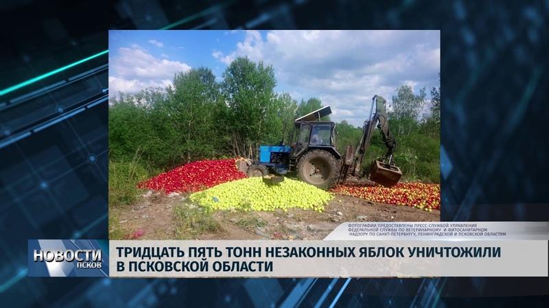 Новости Псков 18.06.2019 Тридцать пять тонн незаконных яблок уничтожили в Псковской области