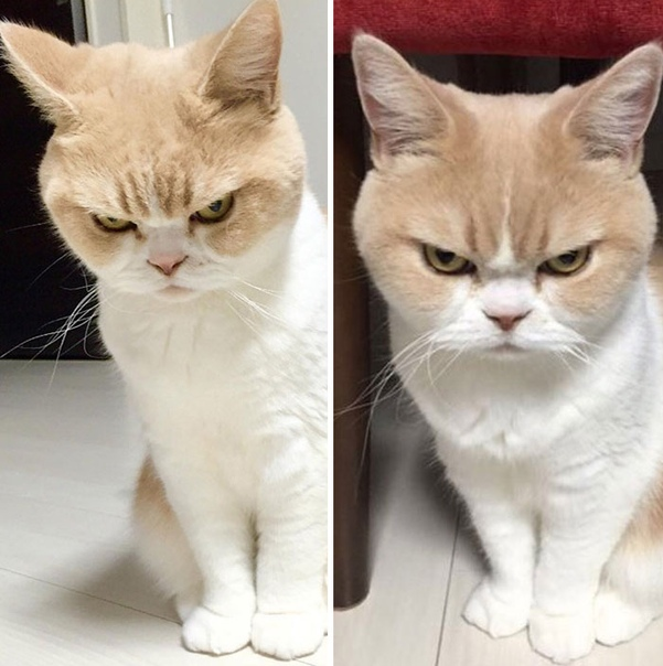 Питомцы до и после добрых слов хозяина Недаром говорят, что доброе слово и кошке приятно. Пусть она это и не покажет, зато собаки радостно реагируют на похвалу хозяина и всем своим видом