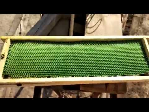 Проверка отстройки ячеек вощины Нижегородка (эксперимент)