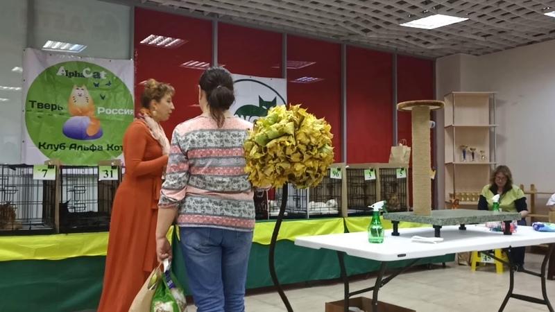 10 мес.Perseya Rysenok 141018 фан-шоу ПДШ 5-е место 14 участников