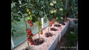 Мои томаты и перцы в маленькой теплице 3х4 с высокими грядками Обзор 16 июля 2018 года