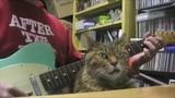 Кот вспоминает как спас ребенка cat saves boy from dog next pt. (httpcoub.comview1qp63) #catarnold