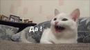 Говорящие коты! Лучшая подборка №4 внимание! 18