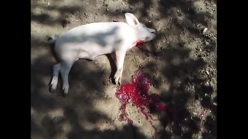 Кирдык свинка по грузински