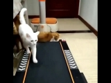 Котики и беговая дорожка
