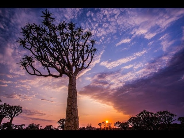 Incredible Wild Namibia 4K