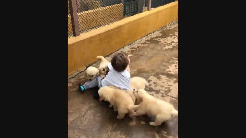 Малыши и игра куча мала