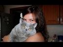 Какие 10 самых красивых пород кошек? 3 часть.