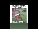 VID_25051223_024539_468.mp4
