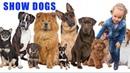 SHOW DOGS. ПОКАЗ СОБАК, КУРИЦ, ЛОШАДЕЙ, КОРОВ И ДРУГИХ ДОМАШНИХ ЖИВОТНЫХ. LIMERICK SHOW 2018.