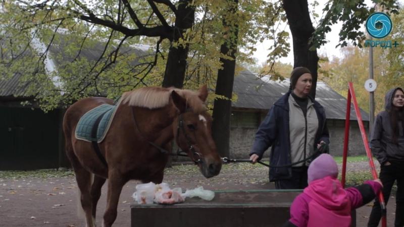 Как это – лечебная верховая езда Город