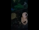 меняю воду черепахам