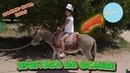 VLOG★Едем в Киргизию на Иссык-Куль★Ослик РОМА или МИЛАНА★Как зовут ослика?