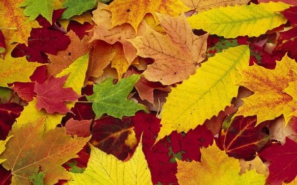 листовой перегной: приготовление и использование. листовой перегной – прекрасное средство для оптимизации структуры почвы, превосходная мульча и подкислитель. готовят листовой перегной с осени,