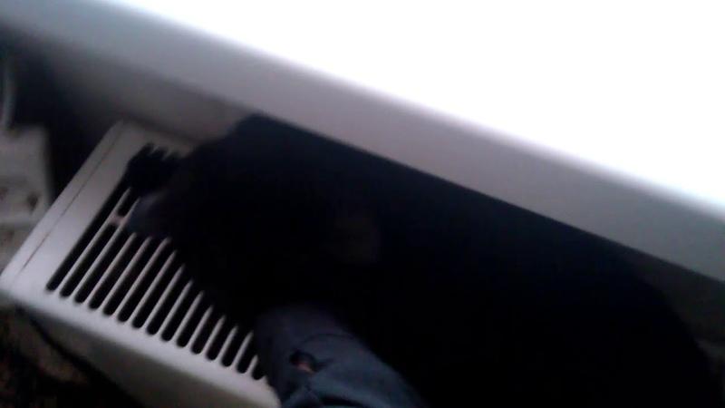 Украл кошку у ЭЛЛИ ДИ?!!?? Моя кошка научилась петь!