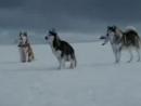 Клип к фильму Белый плен. смотреть онлайн.mp4