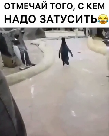 "Vine паблик on Instagram: ""Подпишись👇 @vines_funny_russia Поставь лайк 👍 dance_dag vine вайн dubsmashdag video_dubs dubsmash_tut video_russ..."