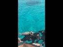 Остров Тиран, Красное море