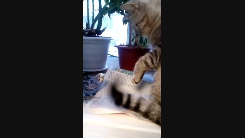Чик🐦 и Сиппо🐈   кошка против попугая