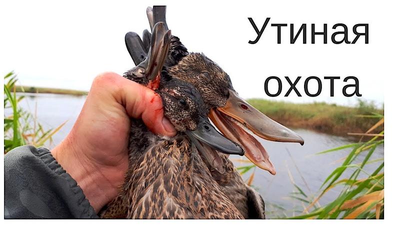 Утиная охота с дратхааром 2018 \ Duck hunting
