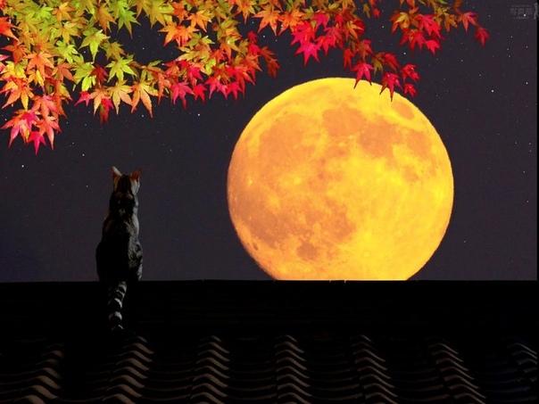 осенняя история он расположился на крыше, неудобно примостившись на крутом скате. опасно, конечно, но вид оттуда того стоил. луна робко глядела из-за туч на город, окрашивая первые покрасневшие