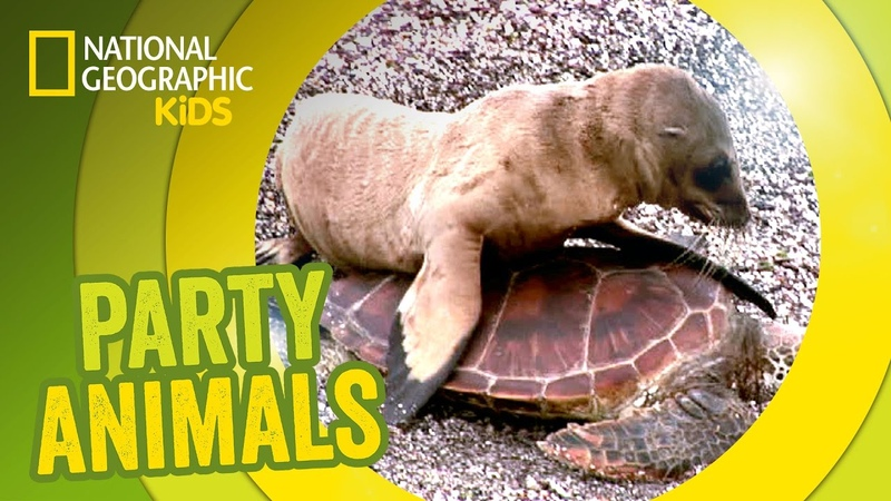 Seal Riding on a Turtle feat. Parry Gripp (Music Video) 🐢 | PARTY ANIMALS PLAYLIST